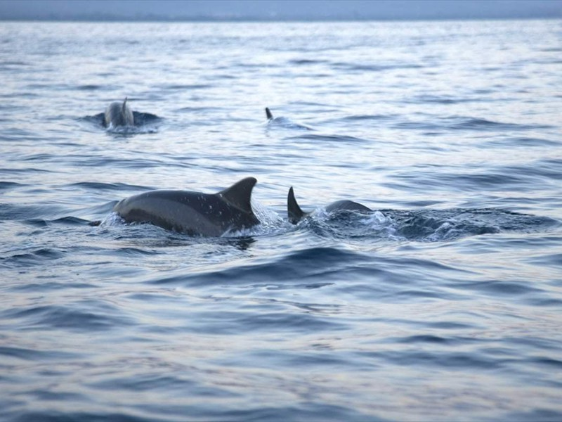 dolfijnen voor villa Pandu1